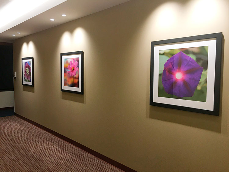 Flower prints at Northwestern Memorial Hospital, Chicago, USA