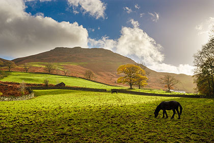 Horse, Lake District