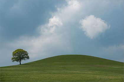 Tree, Cloud, Round Hill