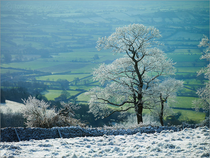 Tree, Frost and Snow