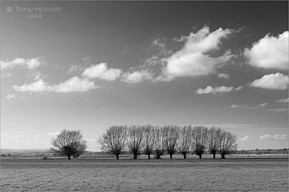 Willow-Trees-Winter-Somerset-Levels