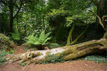 Wooded-Walk-Tremenheere-Cornwall-5706