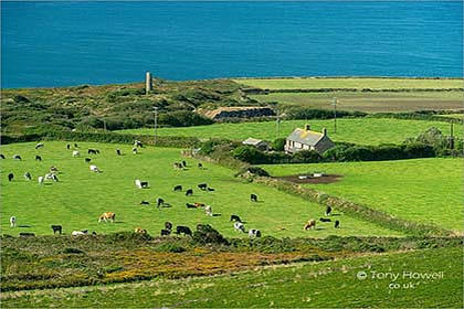 Cows-Farm-St-Agnes-Beacon-Cornwall-AR645