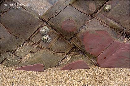 Rock-Abstract-Widemouth-Bay-Cornwall
