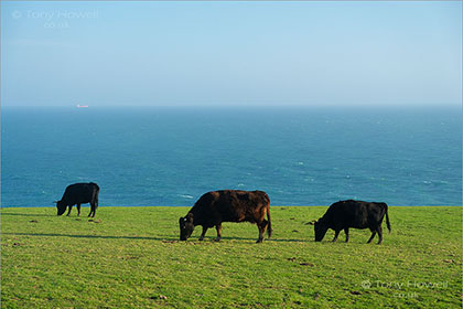 Cows-Lizard-Point-Cornwall