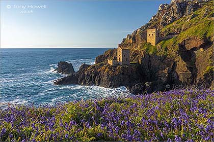 Crowns-Mine-Botallack-Bluebells-Cornwall