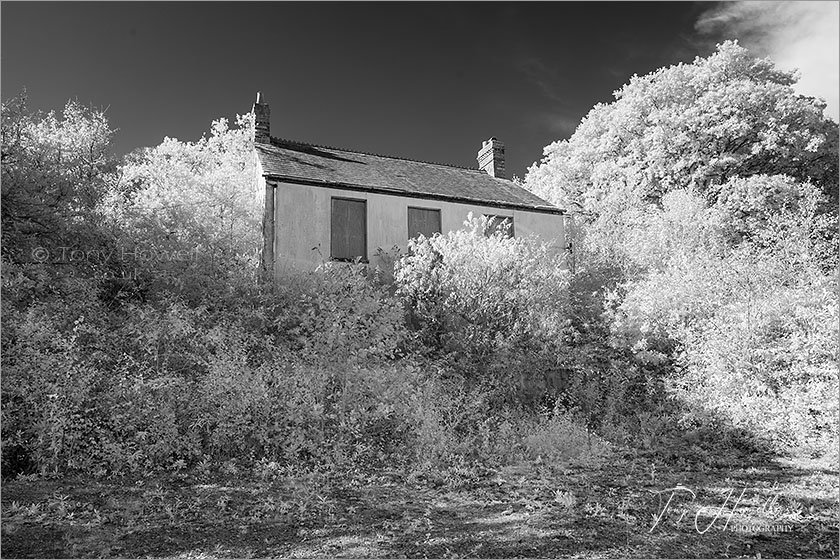 Abandoned House (Infrared Camera; makes grass and foliage go white)