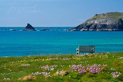Constantine-Bay-Sea-Pinks-Cornwall