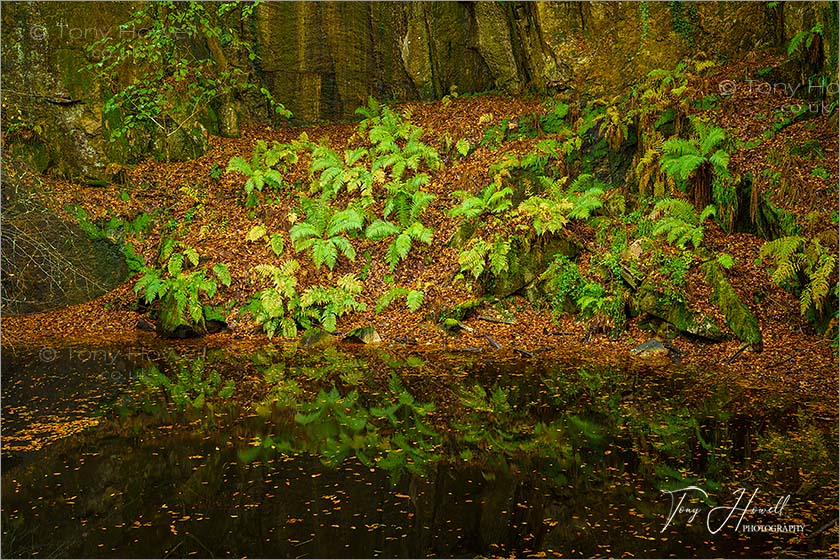 Ferns, Kennall Vale, Autumn