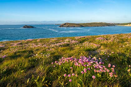 Pentire-Thrift-Newquay-Cornwall