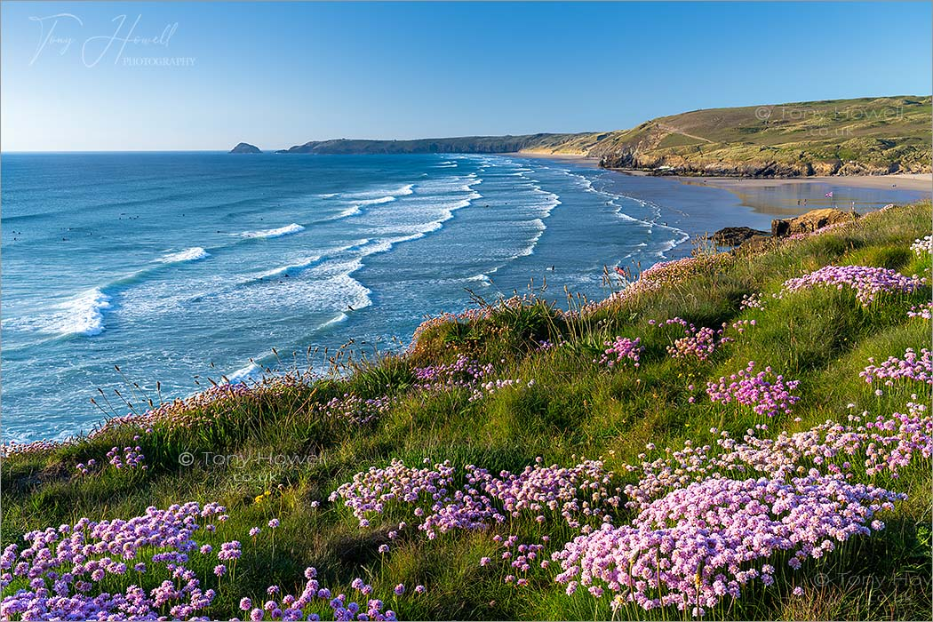Perranporth Beach, Thrift