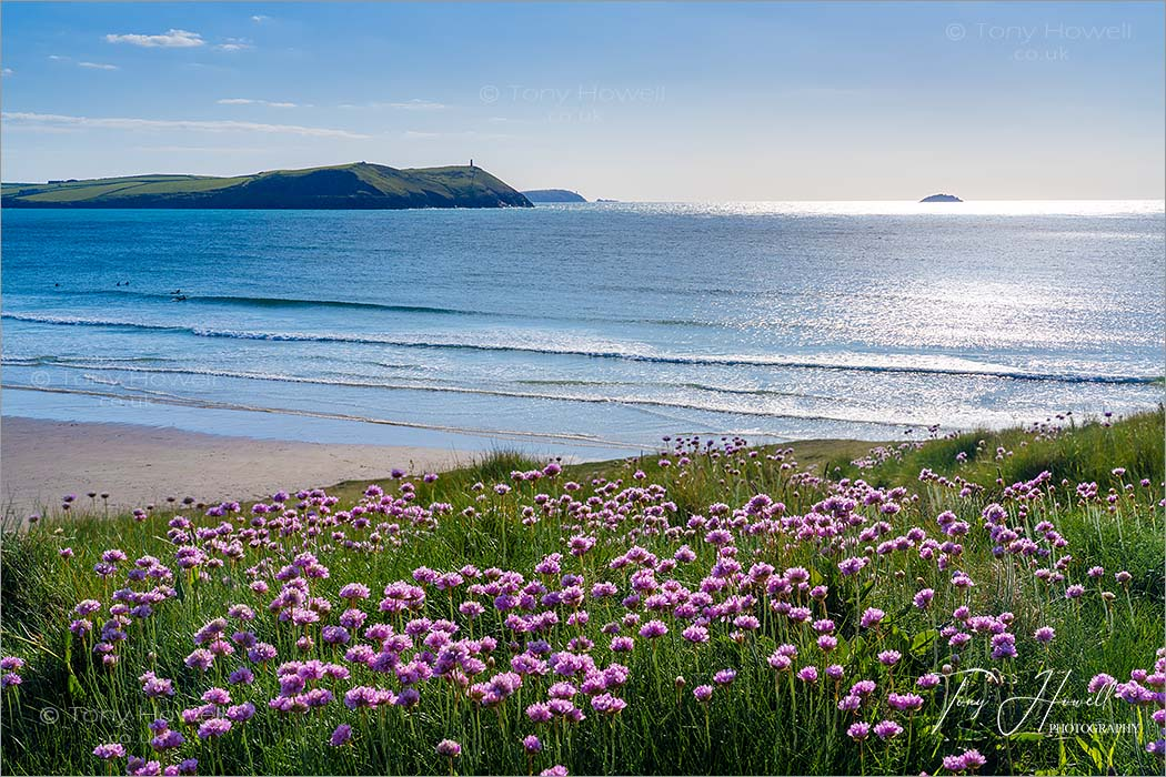 Polzeath Beach Sea Pinks