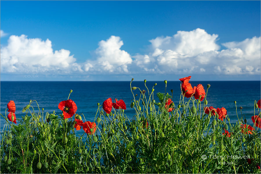 Poppies, Fistral Beach, Newquay