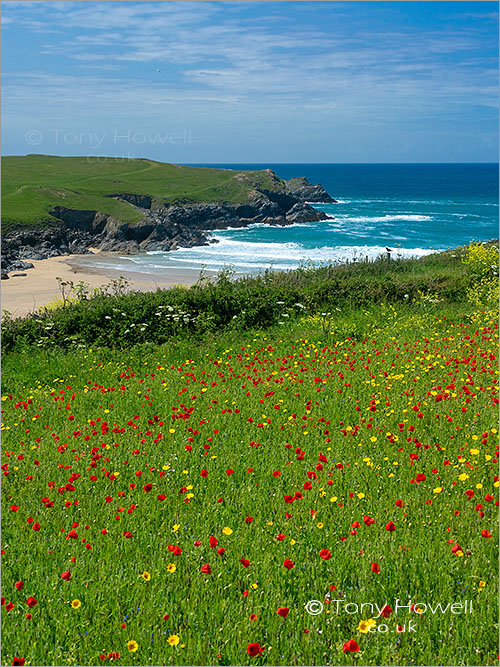Poppies, Polly Joke Beach