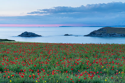 West-Pentire-Poppies-Cornwall