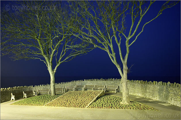 Trees, Night, Clevedon