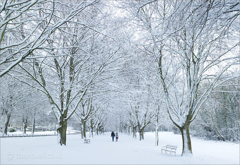 Trees, Clifton Promenade, Snow