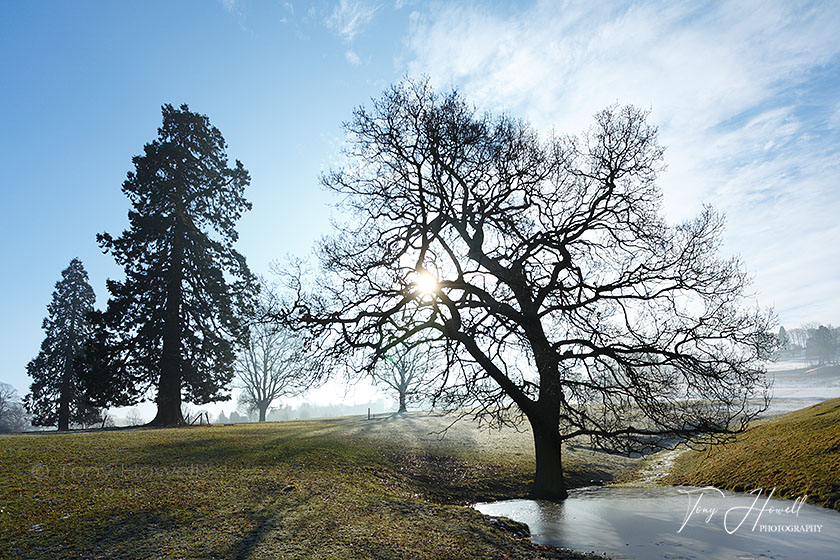 Winter Trees, Mist, The Cotswolds