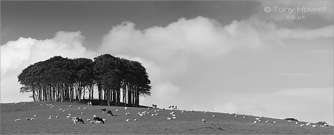 Coming home to Cornwall Beech Tree Copse