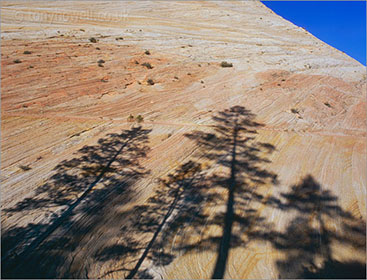 Tree Shadows, Zion National Park