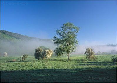 Trees, Mist, Wye Valley